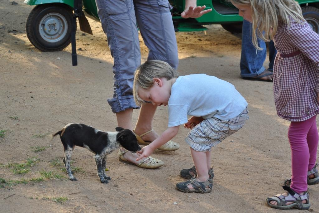 Elia füttert wilden Hund