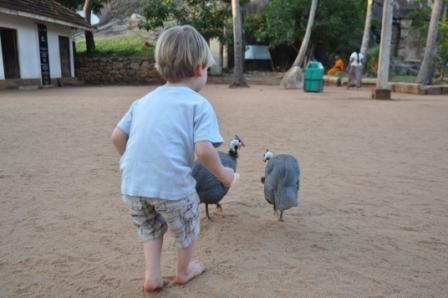 Elia jagt Perlhühner
