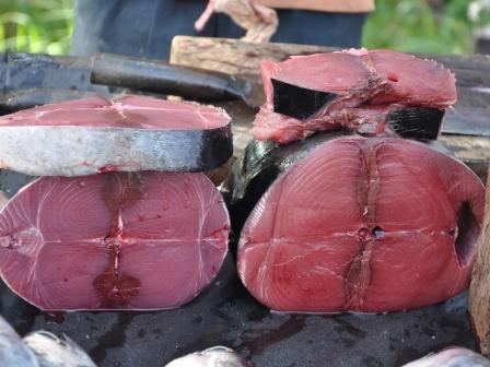 Thunfisch, 2 Qualitäten