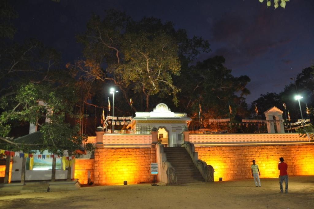 Der Bodhi-Baum - das zweitwichtigste Buddhistische Heiligtum in Lanka