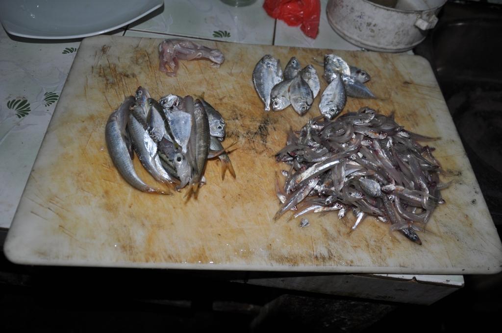 Elias gesammelte Fische mit Kalmar