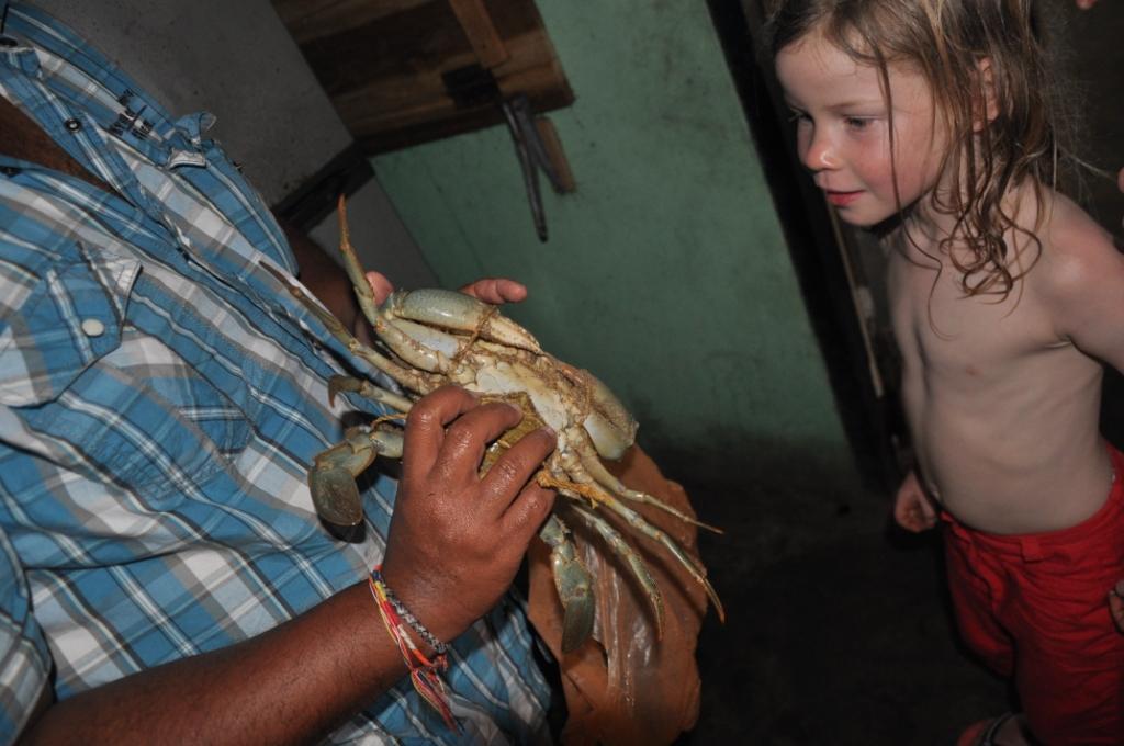 Anouk inspiziert eine Krabbe in der Küche