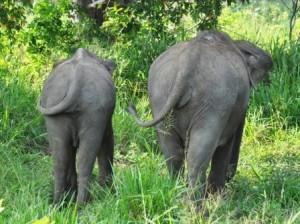 Elefantenpopos im Ecopark