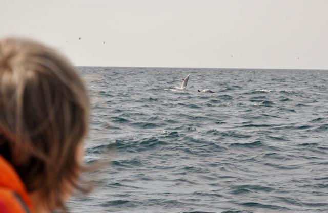 Salto eines Delfins