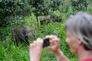 Tiere der Gruppe beobachten