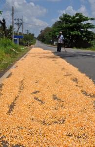 Mais zum Trocknen auf der Fahrbahn, der von Mann mit Besen geschützt wird
